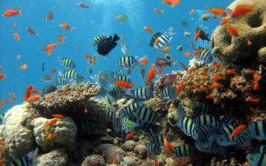 arrecifes dominicanos