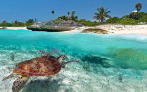 marine-turtle